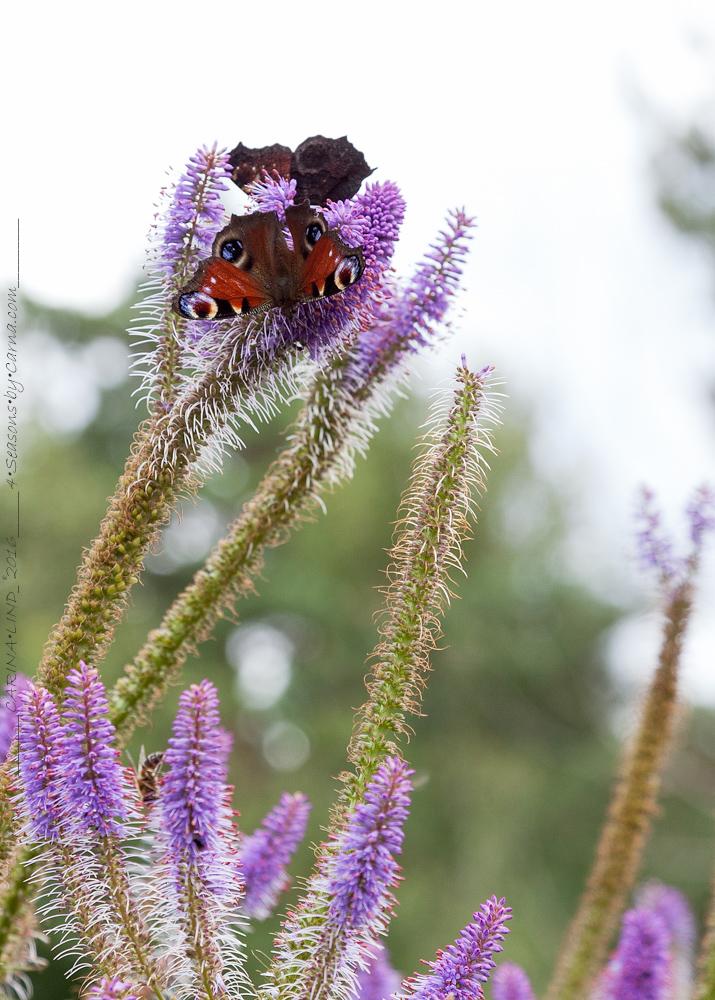 Insektskupan – en lyckosam bieffekt
