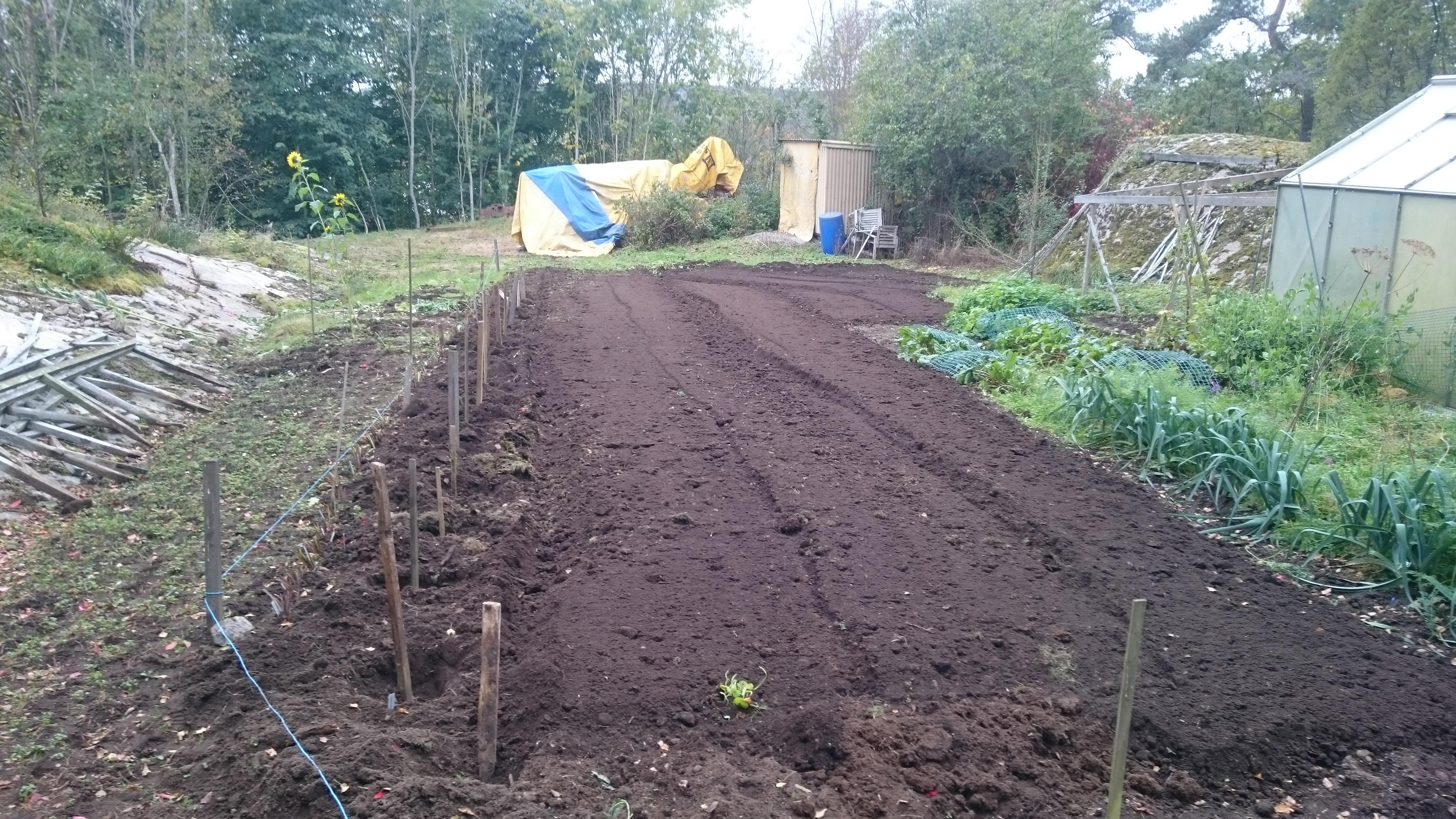Sallatssådd - Grönsakslandet nyfräst