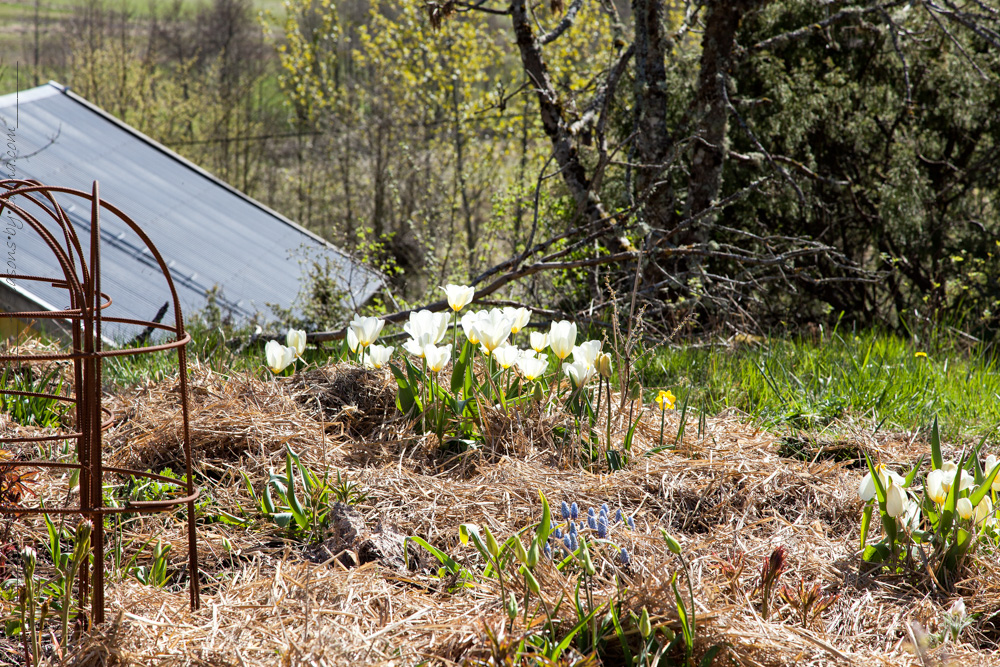 Trädgårdsarbetare i rabatten