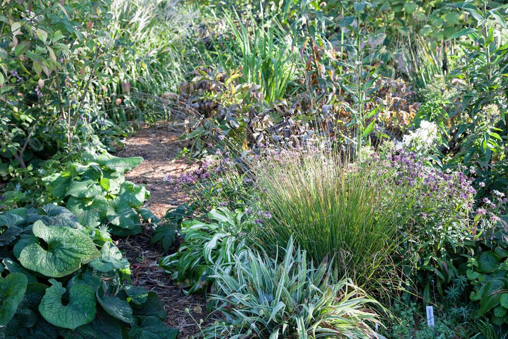 Gräs och hösttrötta perenner