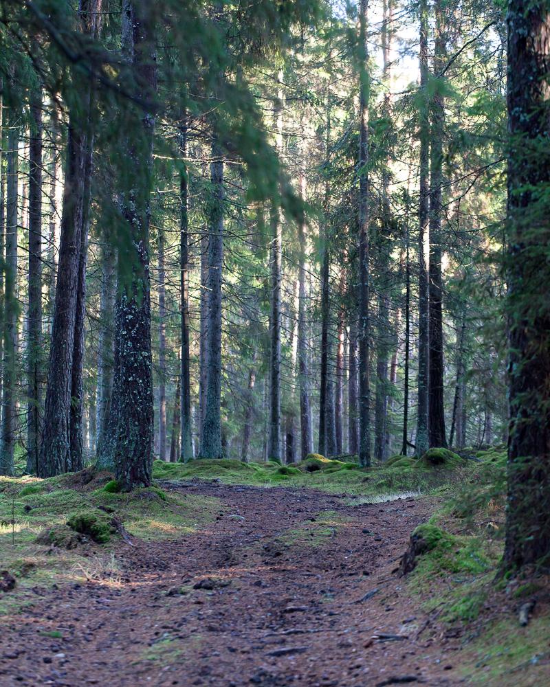 Allemansrätt - Färdsleskogen