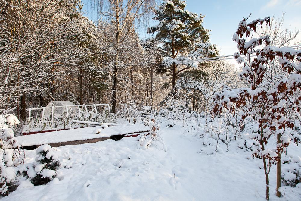 månadsbild December – det vita är borta