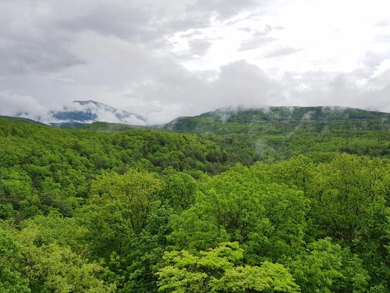 Grönt - Blue Ridge Parkway
