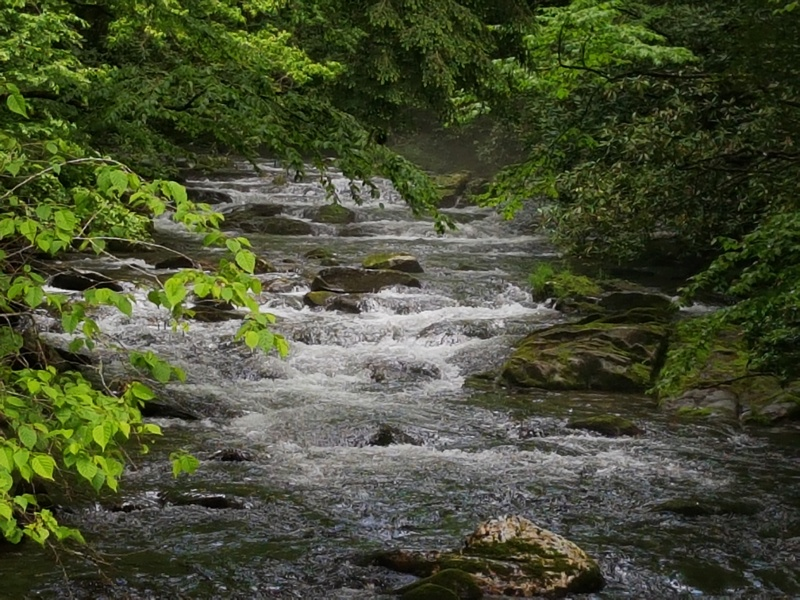 creek-smoky-mountains