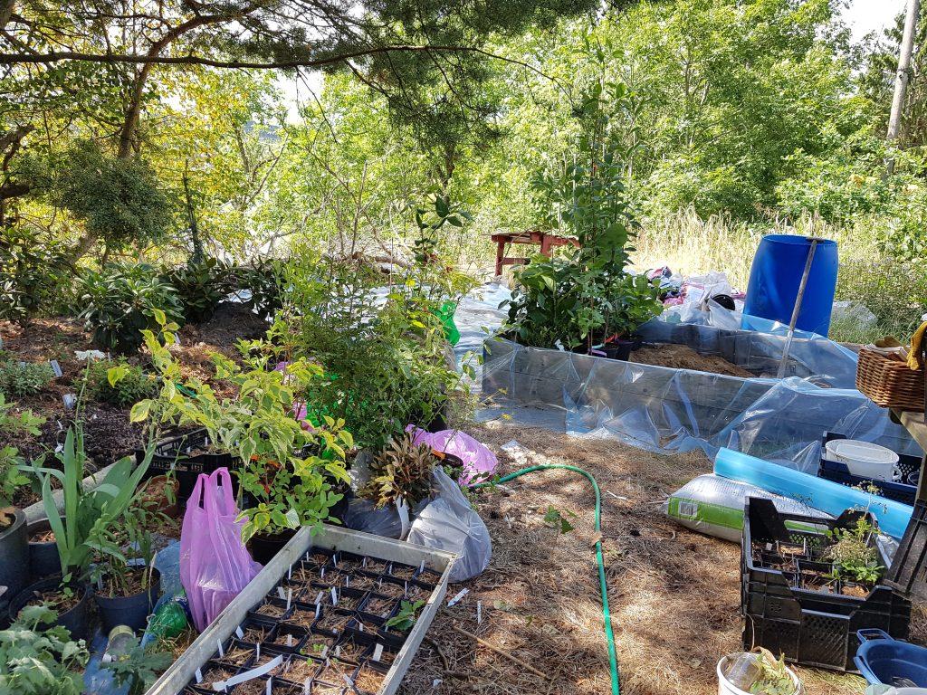 Kvarteret nya rhododendron - kaos efter att jag flyttade kallbänken snabbt