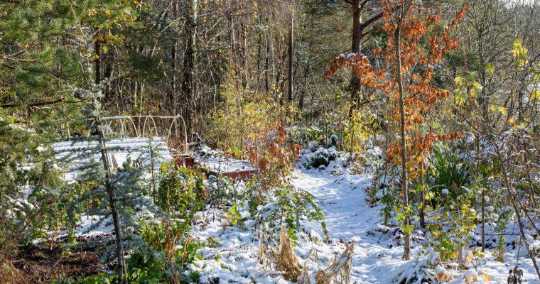 Oktober månadsbild 2018 vinter på besök