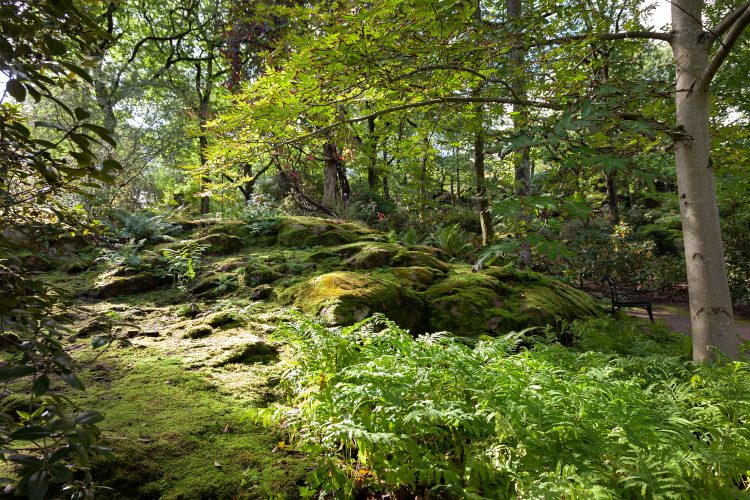 Mossa och ormbunkar - Göteborgs botaniska trädgård