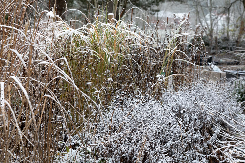 Frost och snö mot slutet av november