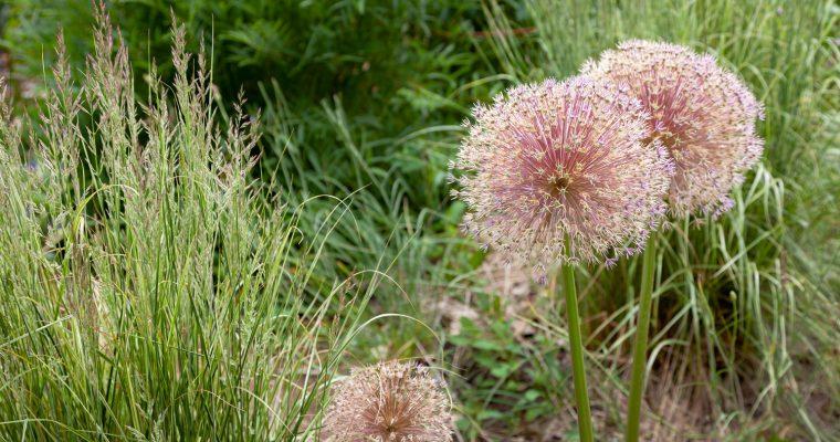 Trädgårdsdrömmar – stoftet de görs av