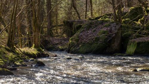 Smultronställen - ån när våren återvänder