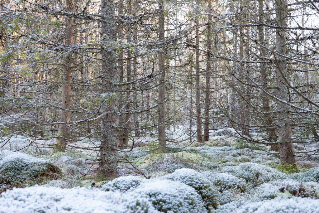 Vinterpoesi - Skogen - när fult är vackert