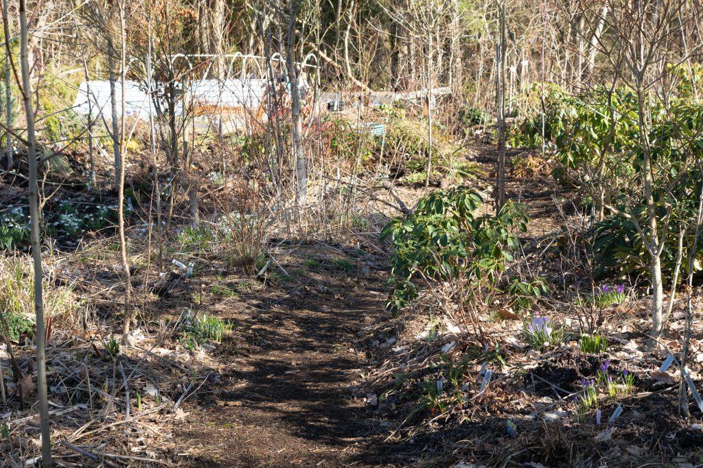 Rhododendronstigen i mars