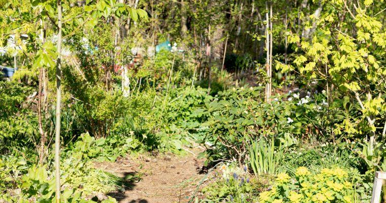 Rhododendronstigen i maj – envisa växter