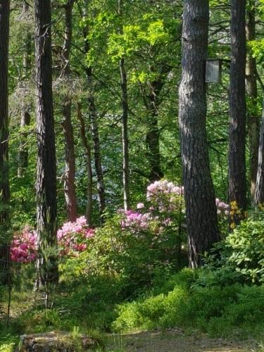 Naturlig rhododendronskog