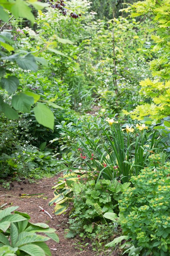 Rhododendronstigen i juni nu dominerar grönt