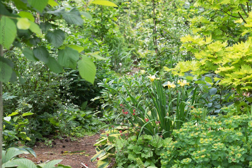 Rhododendronstigen i juni
