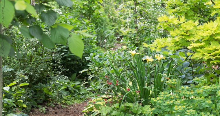 Rhododendronstigen i juni – halvfusk