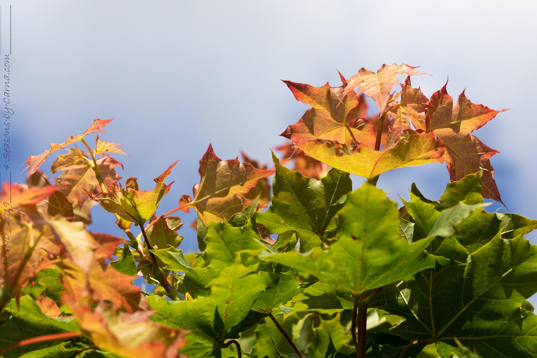 Färgerna som minner om en ny säsong
