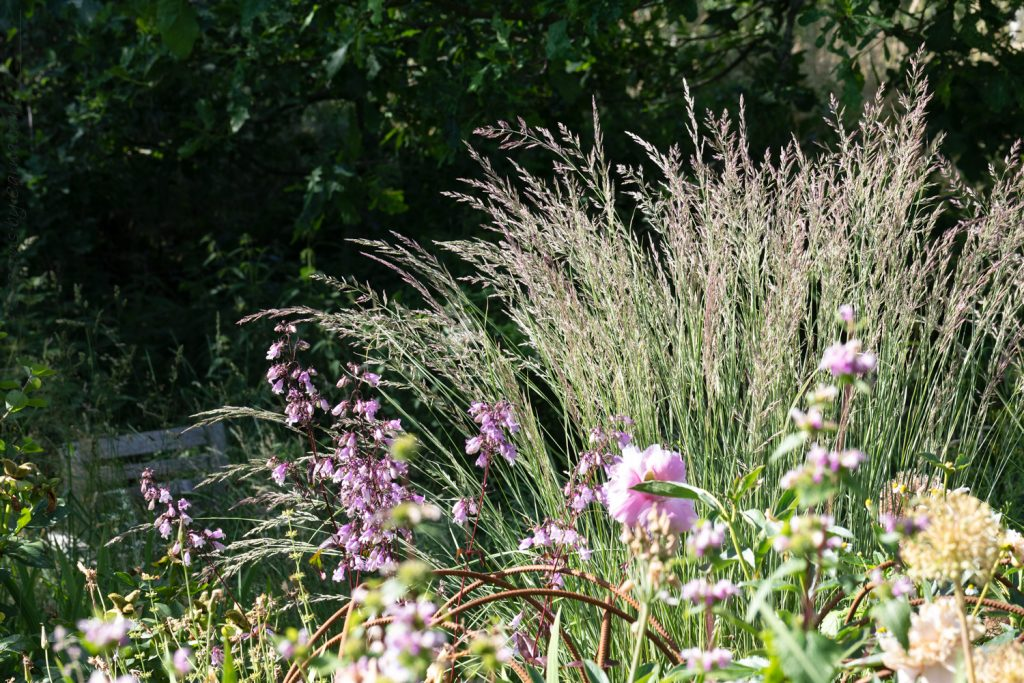 Solsidain bjuder på Calamagrostis x acutiflora 'Overdaam' - prydnadsgräs
