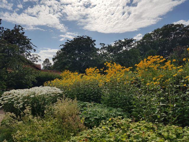 Oslo botanisk hage - oldemorshave