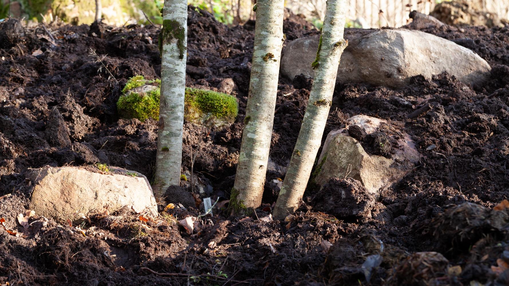 Norra lunden komplett med mossiga stenar