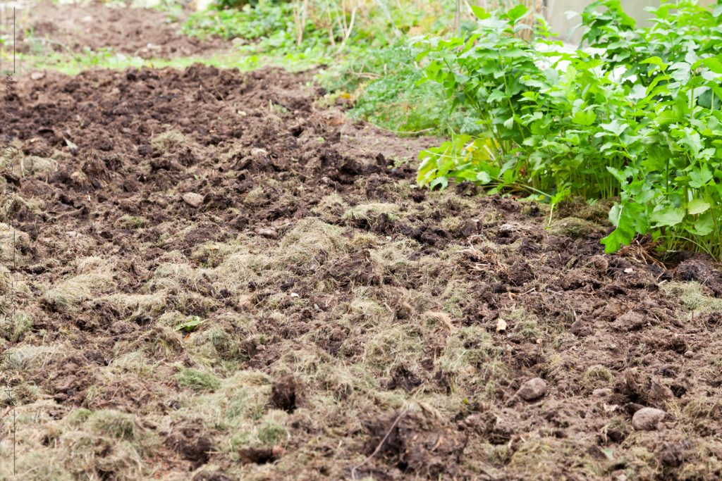 Jorden i grönsakslandet