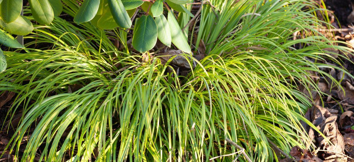 Vintergröna växter som lockar