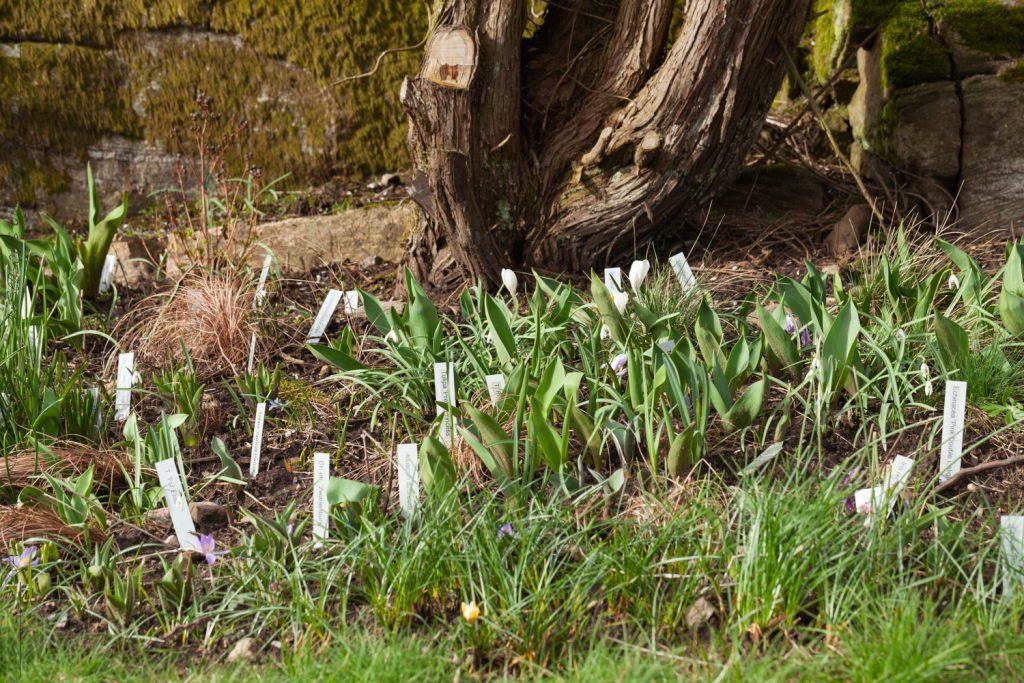 Blomning i torkan - mars