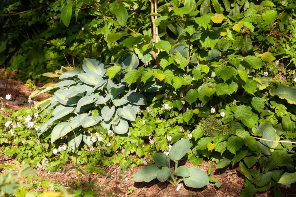 Nyanser av grönt - blad i lunden
