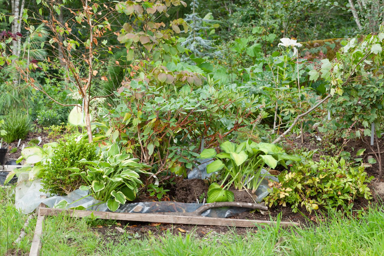 Plaskdamm för trädgårdens bäbisar – jag flyttar växter under torka