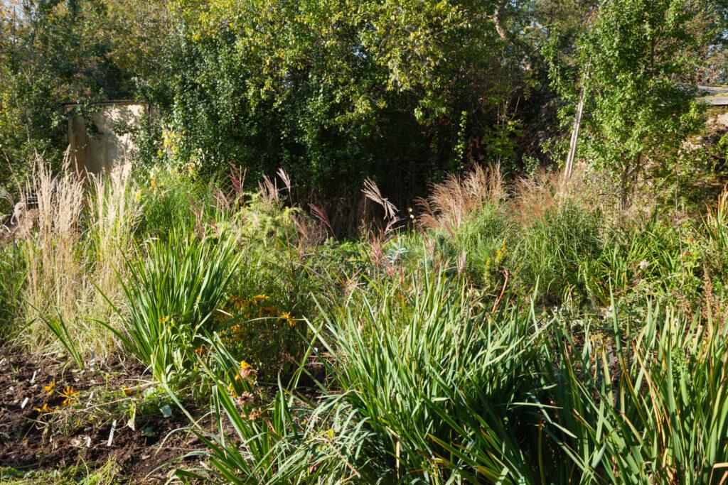 Grönsaksland med prydnadsgräs