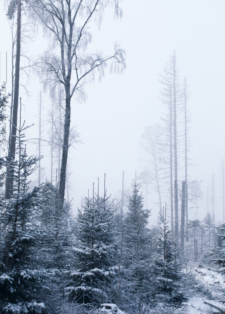 Idétorka - Hygget i dimma