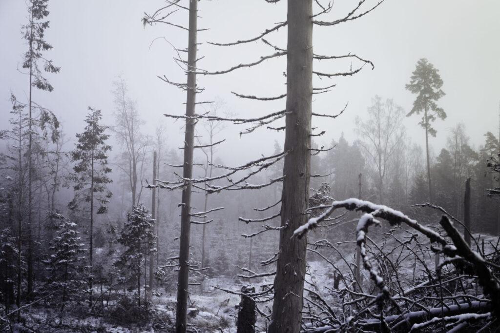 Hygget i dimma