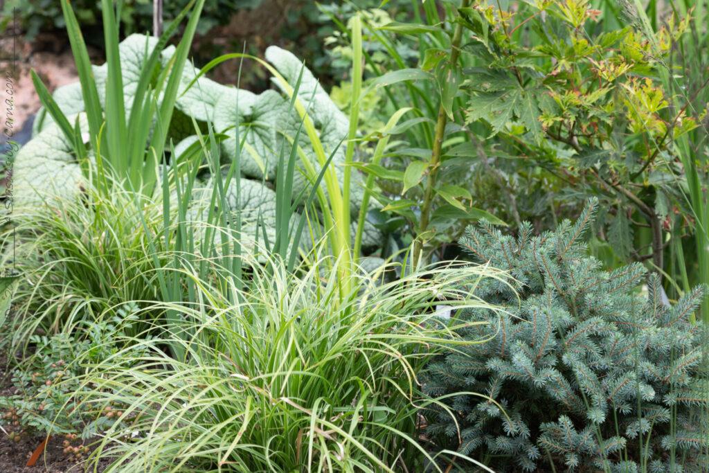 Gräs, barr och kaukasisk förgätmigej