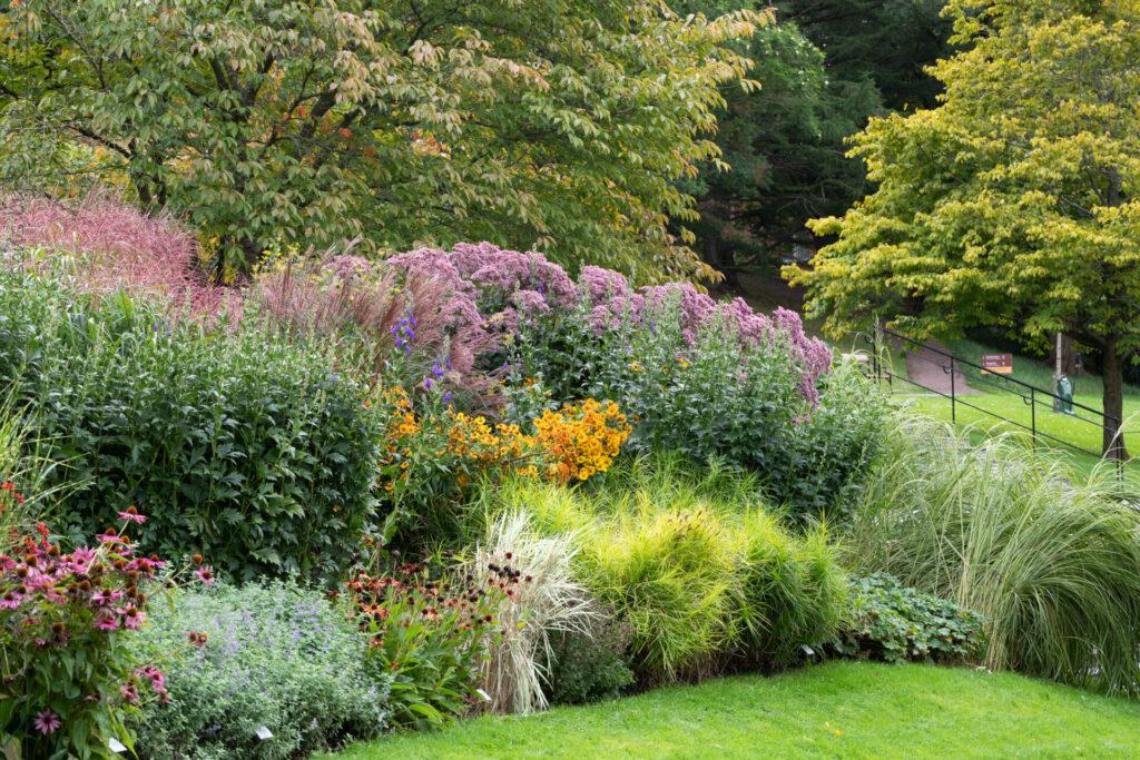 Gramina et flores i september - Göteborgs botaniska trädgård