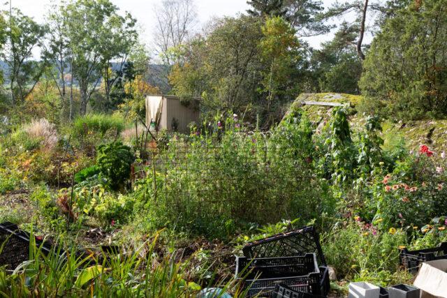 Planerar grönsakslandet